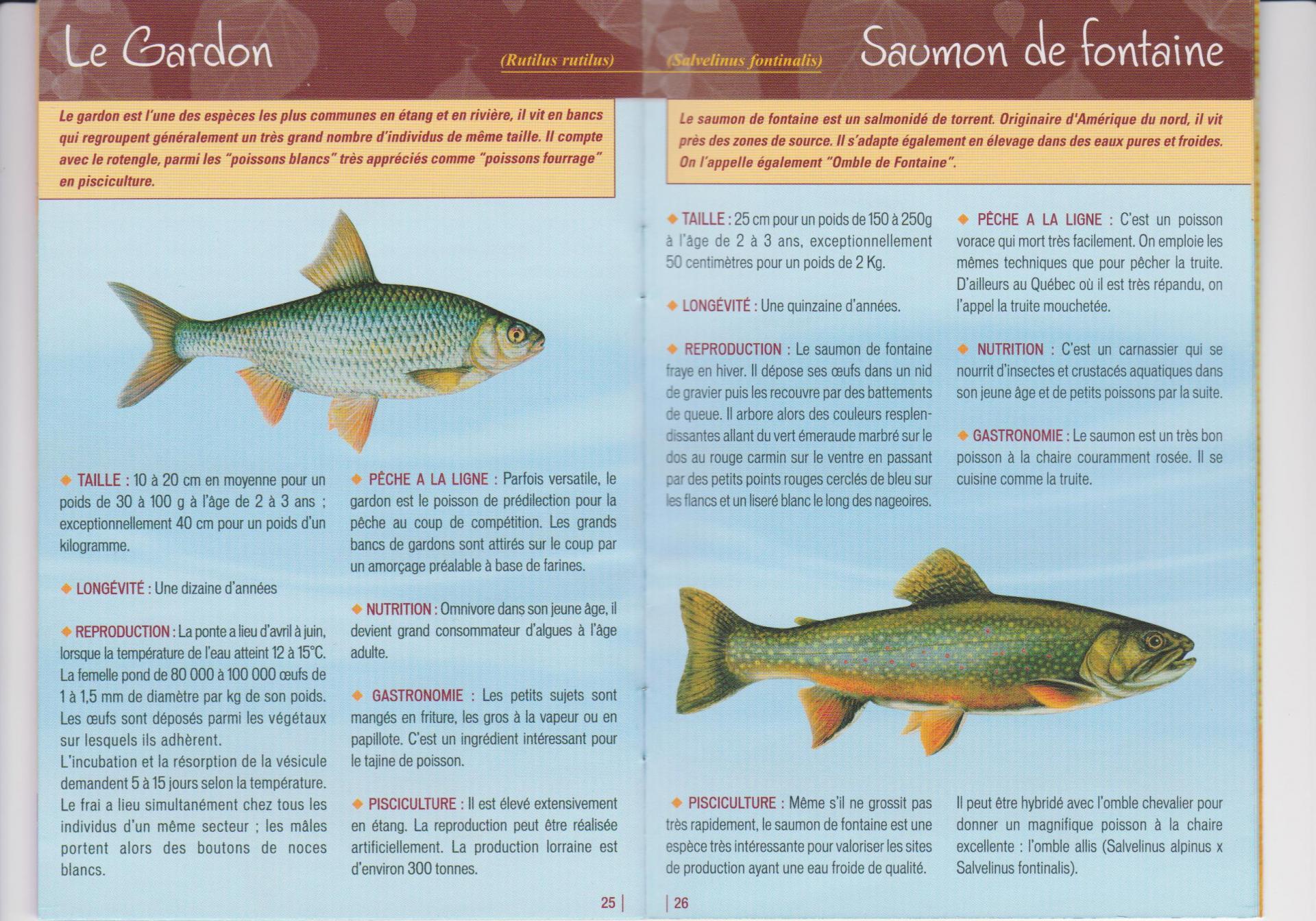 Poisson 2 3